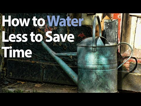 How to Conserve Water in your Vegetable Garden - Water Wisely