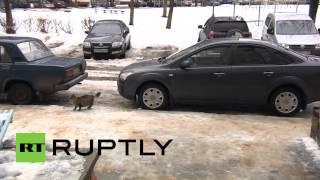 بالفيديو.. قطة تنقذ طفلًا رضيعًا من البرد القارس