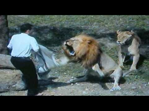 Fatal Lion Attack
