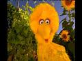 Sesame Street - Postcards from Big Bird - Farm
