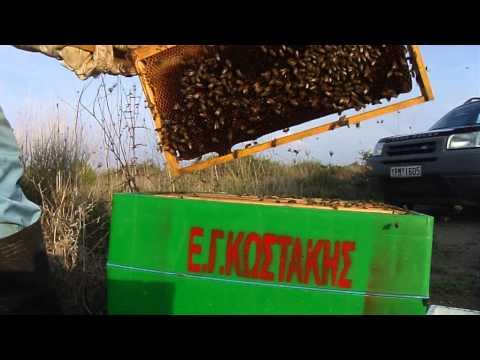 Μελισσοκομία αφαιρεση πλαισιων 5 δεκ 2014