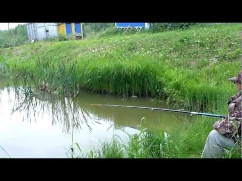 видео как выращивать карася в
