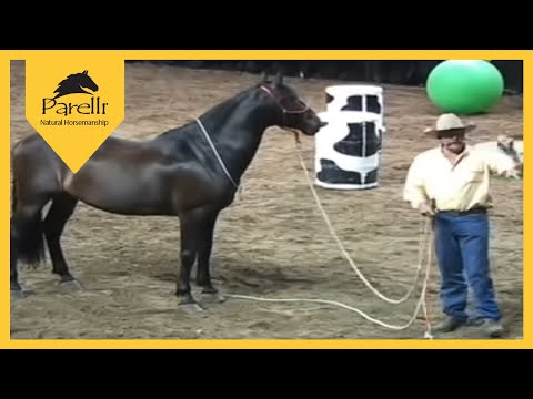 Parelli Horse Training - What Is Respect?