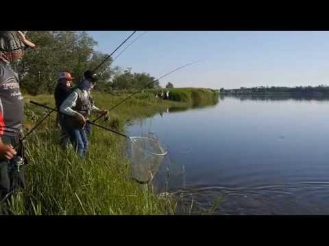 рыбалка на барабой видео