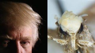 Trump's hair inspires moth name - CNN