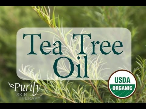 Tea Tree (Melaleuca) Essential Oil, All You Ever Need To Know