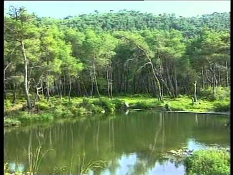 Forests and Development in Syria  English Version الغابات والتنمية في سورية
