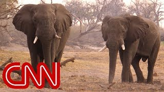Can a Chinese law stop the slaughter of African elephants? - CNN