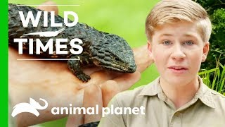 A Season of Wild Times with The Irwins - ANIMALPLANETTV