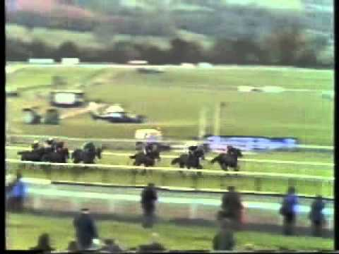Horse Racing 1985 Mackeson Gold Cup Chase Cheltenham  Half Free second win