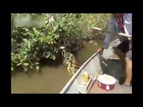 Increible Anaconda gigante en un rio / Amazing giant anaconda in a river