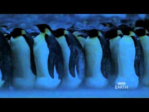 Emperor Penguins in Antarctica - BBC Planet Earth -X-U8h1SCDbU