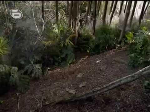 Robinson Crusoe сериал 1 епизод 01 (Бг Аудио 2008)
