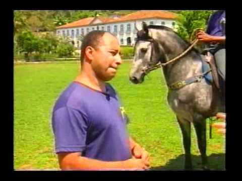 Paty do Alferes a capital dos Cavalos Manga Larga Marchador