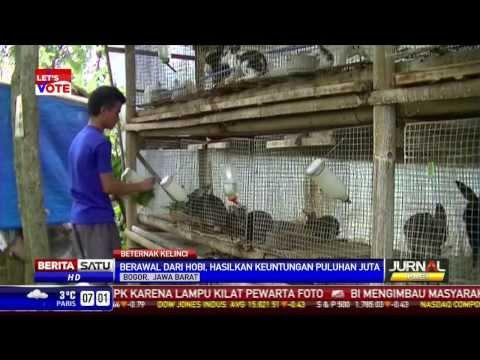 Di Bogor, Kelinci Bisa Hasilkan Puluhan Juta Rupiah