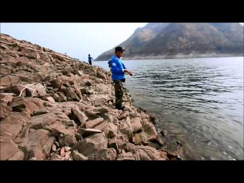 กระสูบเืดือด_ Jungle perch at Bhumibol Dam