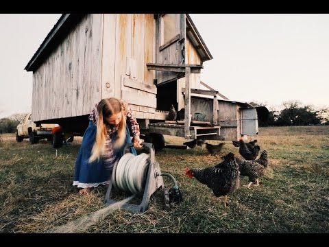 12 Year Old Girl Makes $20 A Day Raising Chickens