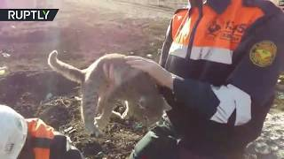 Cat rescued after getting stuck in a concrete slab - RUSSIATODAY