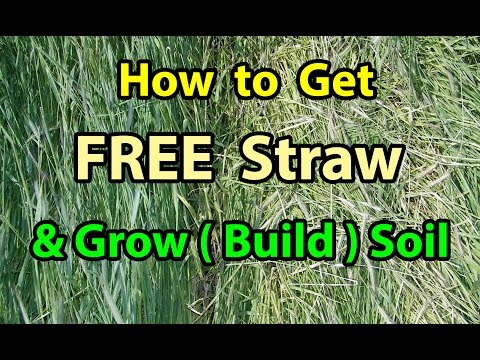 How To Get FREE Straw and Build Soil NO TILL Homesteading Vegetable Gardening for beginners 101