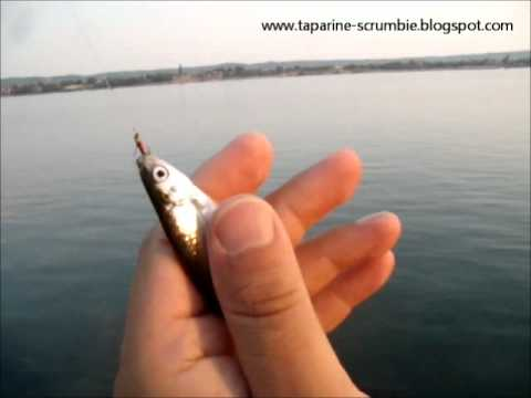 Pescuit la oblete folosind taparina cu musculite artificiale 2.wmv