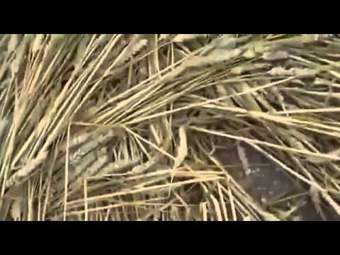 OVNIS REALES GRABADOS HACIENDO CIRCULOS EN COSECHAS 2012