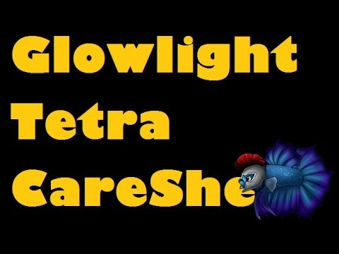 How To Care For Glowlight Tetras, Sexing Glowlight Tetra, Breeding Glowlight Tetra