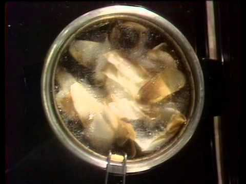 Julia Child The French Chef- French Fries