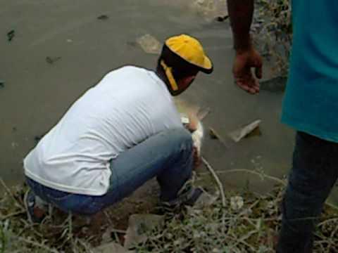 Aksi Patin Sungai Kelang