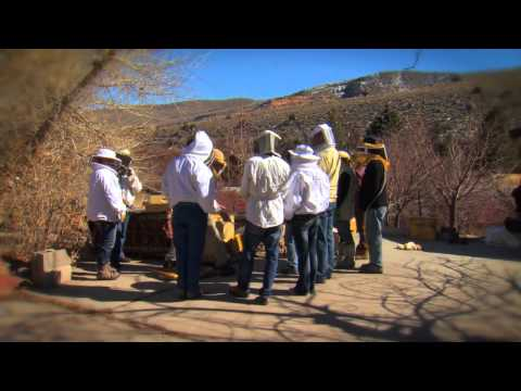 Farm To Fork Wyoming - Bees (promo)