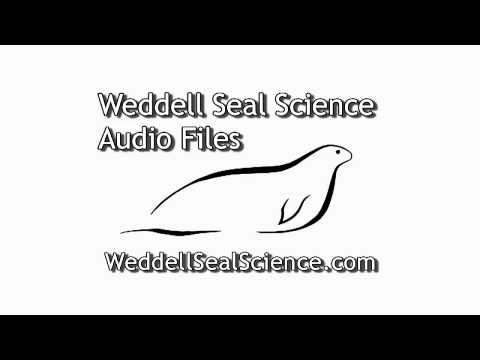 Weddell Seal Audio Files