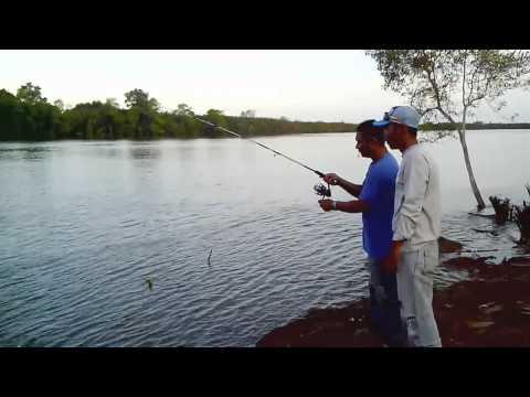 Mancing Mania : strike ikan sembilang di sungai air payau