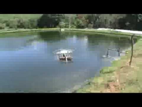 Construccion de estanque rustico tilapia for Cria de tilapia en casa