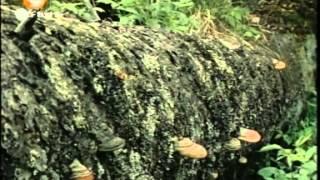 138. Peter steht im Wald