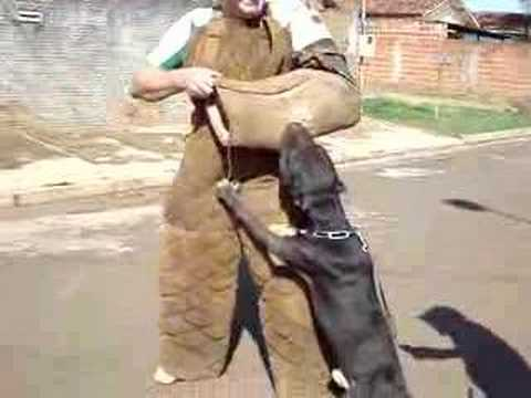 Cães de ataque 001