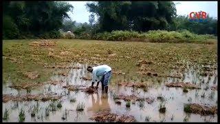 Aswaraopeta Farmers Crop Loss Due to Toofan | Bhadradri Kothagudem district | Telangana | CVR NEWS - CVRNEWSOFFICIAL