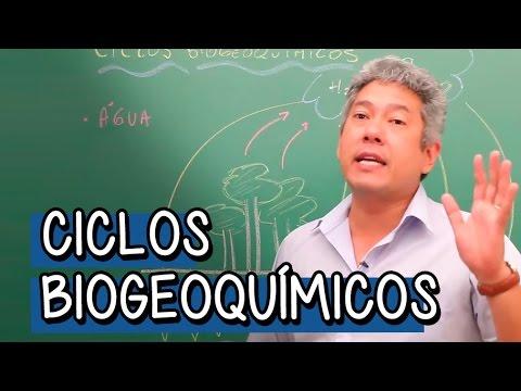 Ciclos Biogeoquímicos - Ciclo curto da água