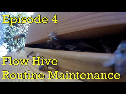 Flow Hive - Episode 4 - Routine Maintenance