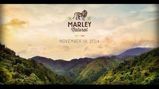 """""""بوب مارلي"""" واجهة لأول علامة تجارية عالمية لبيع الماريجوانا"""