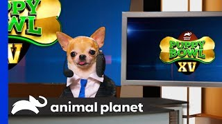 Around the Bowl & Spot Center | Puppy Bowl XV - ANIMALPLANETTV