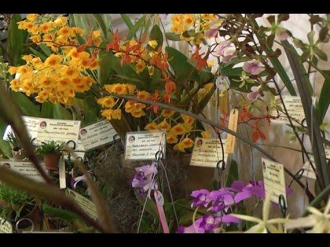 TV Costa Norte - Exposição de Orquídeas e Bromélias invade o Forte São João