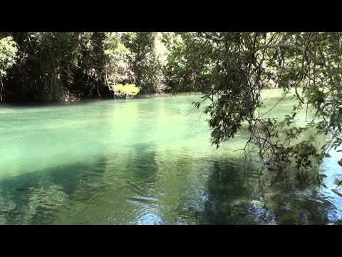 Sons da Natureza, Som de pássaros, Rio da prata, 1:00 Hora ,Relaxamento, reflexão, contemplação,