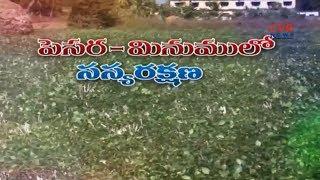 అపరాల సాగు | Black Gram &  Mung Beans Crop Cultivation | Farming Information Guide | Raithe Raju - CVRNEWSOFFICIAL