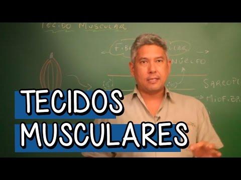 Tecidos Musculares - Extensivo Biologia | Descomplica
