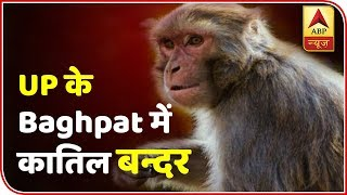 65-year-old killed by a troop of monkeys in Uttar Pradesh's Baghpat - ABPNEWSTV