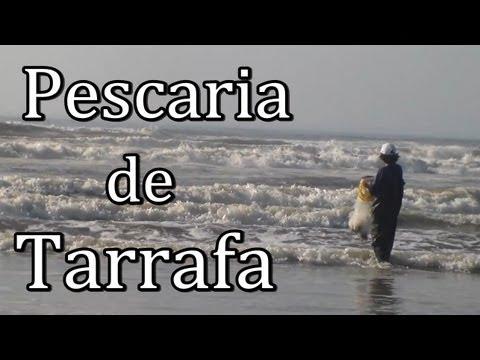 Pescaria de Praia com Tarrafa - [Pesca Vídeos]