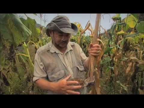 Green Gold  - Documentary by John D. Liu