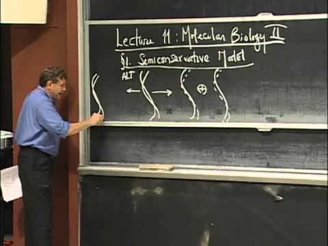 DNA Structure and Classic experiments, excerpt 2 | MIT 7.01SC Fundamentals of Biology