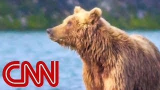 Interior moves to allow bacon, doughnuts to bait bears - CNN