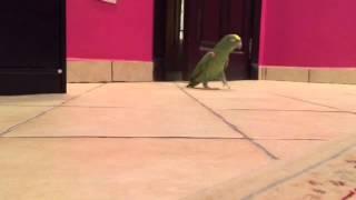 Bekloppter Papagei