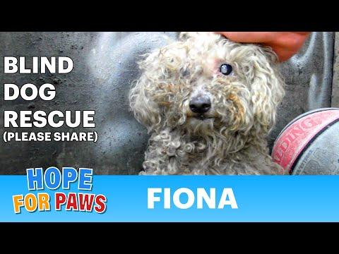 0 一隻盲眼流浪狗的故事